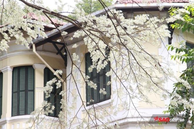 Khung cảnh thơ mộng của Hà Nội vào mùa hoa Sưa.