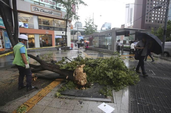 Một cây bị bật gốc.