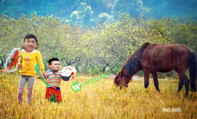 Văn Hậu nắm tay Quang Hải đón Trung thu bên con trâu và cánh đồng bát ngát,