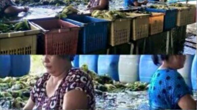 """Bức hình về quy trình làm dưa muối bẩn đang làm """"chao đảo"""" cư dân mạng Thái Lan."""