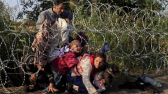 Một gia đình cố gắng lách qua hàng rào dây thép gai chặn ở biên giới Hungary – Serbia.