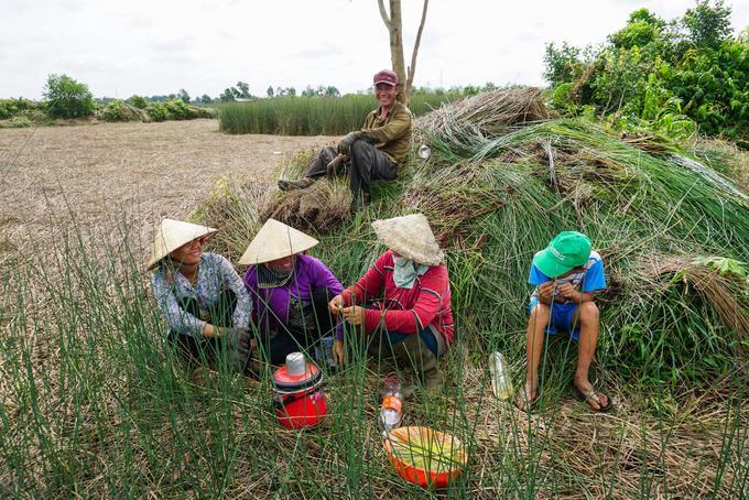 """Giờ nghỉ trưa trên đồng cỏ bàng của gia đình ông Trần Văn Nhựt (42 tuổi). """"Nhà tôi trồng 1,5 ha, thu hoạch quanh năm, cả nhà đều trồng bàng thay lúa. Làm nghề này cũng cực nhưng được cái giá đầu ra ổn định, trồng lại không tốn nhiều công chăm sóc. Nhà nào ít thì một năm lãi cũng trên 50 triệu đồng, nhà trồng nhiều thì thu nhập hơn trăm triệu là bình thường"""", ông Nhựt chia sẻ."""