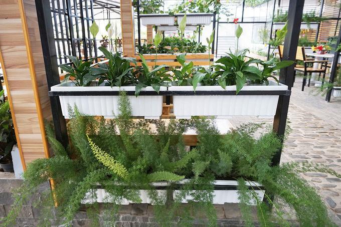 Trên mỗi bàn cho khách đều bày trí một loại hoa hoặc rau, trồng trong các loại chậu có chất liệu nhẹ, gần gũi với thiên nhiên. Điều này giúp du khách như được thưởng thức cà phê trong không gian một trang trại rau, hoa ở Đà Lạt.
