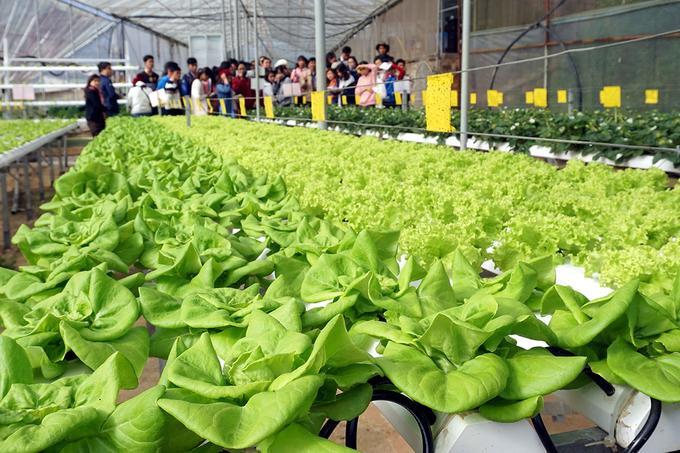 Nếu không gian chính là nơi khách thưởng thức đồ uống thì khu vực trồng rau, trái cây bằng phương pháp thủy canh, khí canh dành cho những ai muốn tìm hiểu về hoạt động này.