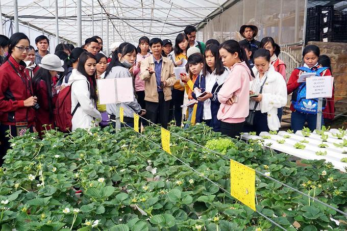 Nhiều đoàn sinh viên học ngành nông nghiệp, công nghệ sinh học của Đại học Đà Lạt, Đại học Cần Thơ… còn đến đây để kiến tập, tìm hiểu thực tế về ứng dụng công nghệ cao trong sản xuất nông nghiệp.