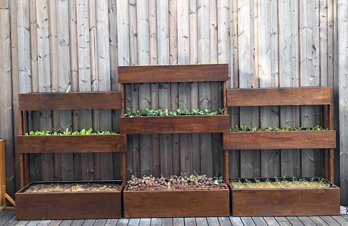 Tăng Thanh Hà chọn chậu gỗ thay vì thùng nhựa hay xốp như cách mà các bà nội trợ hay sử dụng để trồng rau quanh nhà.