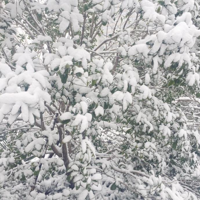 Khoảng 14h40 ngày 24/1, tuyết bắt đầu rơiở Thường Châu, Giang Tô, Trung Quốc.