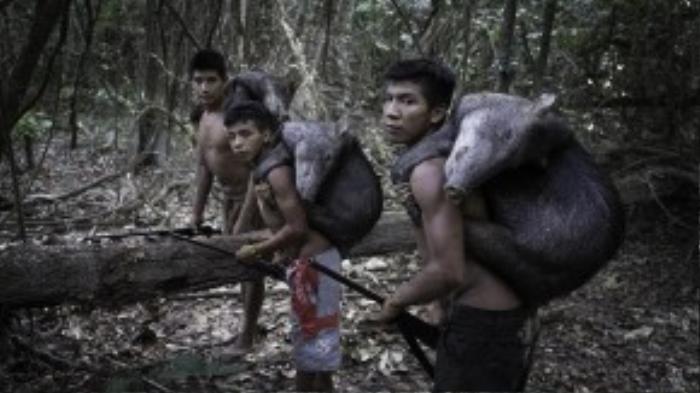 Bộ tộc Awa trước đây có đến hơn 10.000 người, nhưng giờ chỉ còn khoảng 400 người, và đang đứng trên bờ tuyệt chủng.