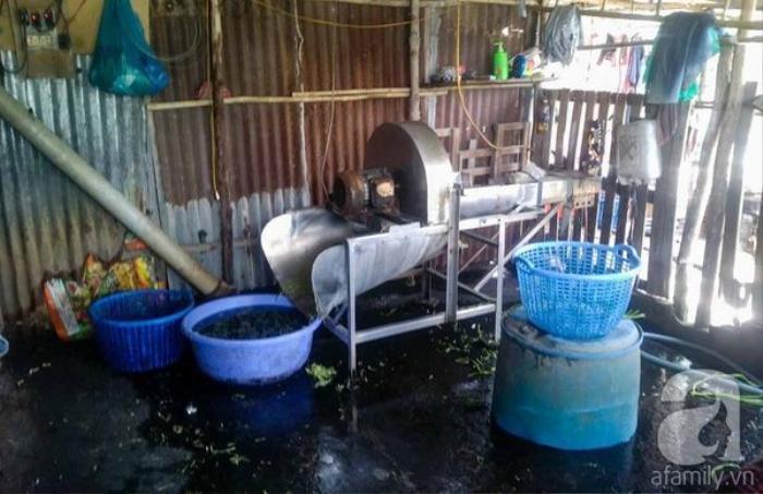 Cơ sở sản xuất rau muống ngâm hoa chất.