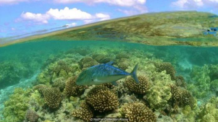 Khu bảo tồn hải dương quốc gia Papahānaumokuākea có hệ sinh thái rất đa dạng.
