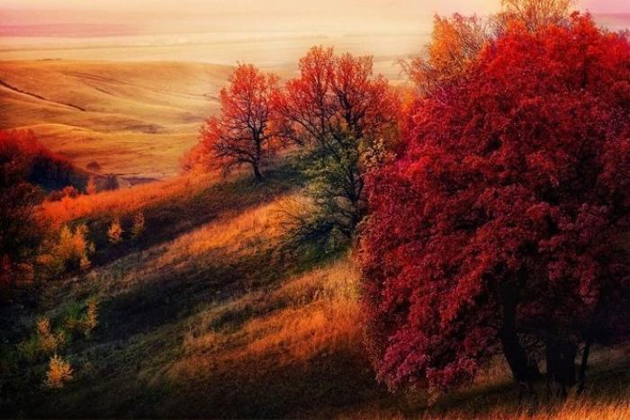 Bức ảnh chụp tại Tatarstan, Nga đẹp ngỡ như tranh với màu đỏ, cam, vàng đẹp như trải thảm.