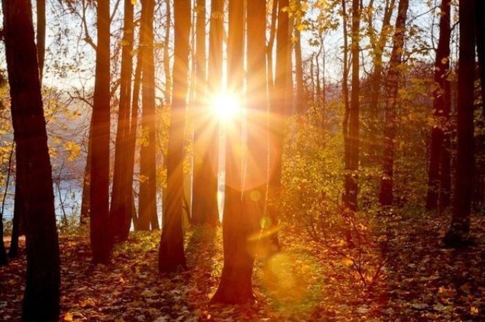 """Mùa thu vàng nước Nga có lẽ là """"kỳ quan"""" mà không du khách nào đến với đất nước này nên bỏ lỡ. Những khu rừng bình thường cũng sẽ trở nên thơ mộng chẳng kém gì bức tranh Mùa thu vàng nổi tiếng của Levitan."""