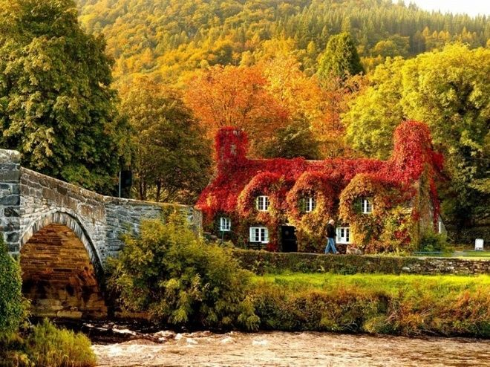 Ngôi nhà xây từ thế kỷ 15 được bao phủ bởi một lớp cây với lá đã chuyển sang màu đỏ và vàng khi mùa thu về ở vùng Llanrwst, bắc xứ Wales.