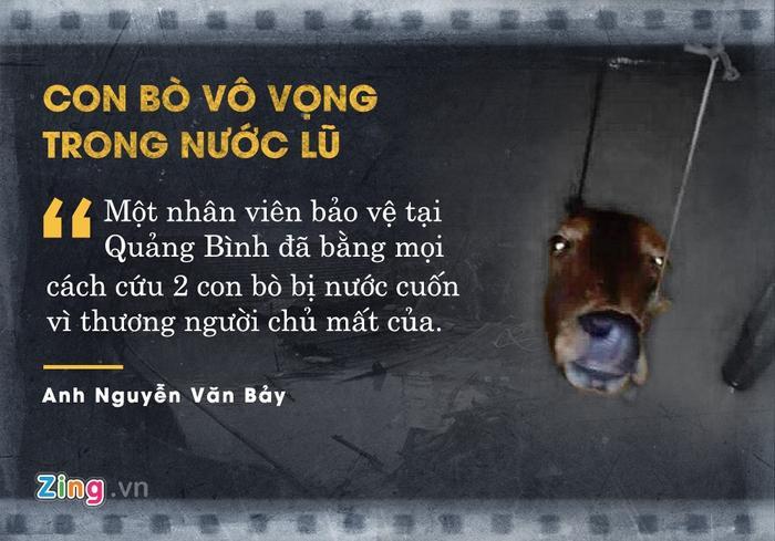 Trong trận lũ tại Quảng Bình tháng 10 vừa qua, anh Nguyễn Văn Bảy - một nhân viên bảo vệ - phát hiện 2 con bò bị nước cuốn. Gia đình anh Bảy đã dùng mọi cách cứu những con vật vì thương người chủ mất của. Bức ảnh con bò vô vọng trong nước lũ do chính anh chụp nhanh chóng gây chú ý trên mạng.