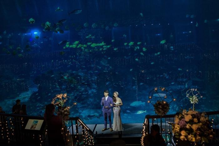 """""""Sân khấu"""" là đại dương xanh với hàng nghìn loại cá."""