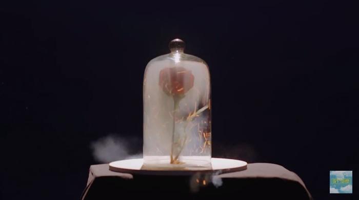 Hình ảnh bông hồng cháy trừu tượng trong MV được sắp đặt một cách khéo léo.