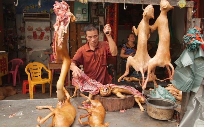 Những hình ảnh đau lòng ở lễ hội thịt chó tàn bạo nhất thế giới