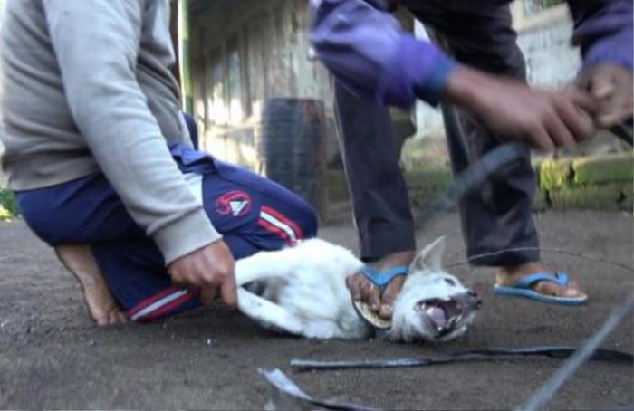 Bán thịt chó giả danh thịt gà ở Bali: Bí mật động trời của điểm đến nổi tiếng nhất Indonesia