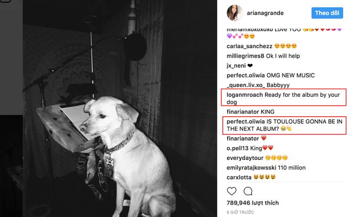 """""""Đã sẵn sàng cho album tiếp theo bởi chú cún của chị (Ari)"""", """"Có phải Toulouse sẽ góp giong trong album kế tiếp không?""""."""