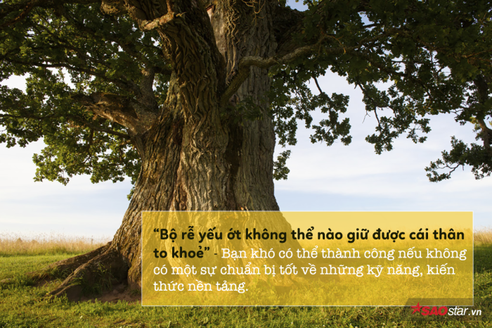 Câu chuyện cây sồi và bài học sử dụng thời gian hiệu quả để phát triển bản thân ảnh 5