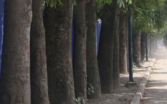 Số cây xanh này nằmtrong dự án đầu tư mở rộng đường vành đai 3 đoạn từ Mai Dịch đến Cầu Thăng Long, Hà Nội. Vì thế, theo kế hoạch, đơn vị thi công sẽ chặt hạ hơn 1.000 cây, di chuyển 158 cây, cắt tỉa 142 cây.