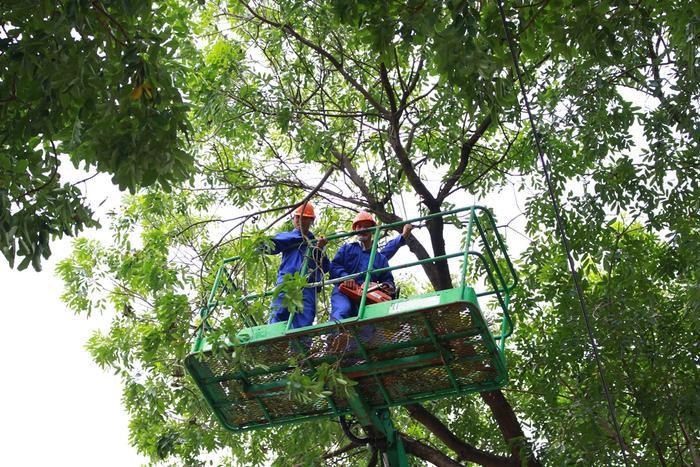 Theo Ban Quản lý dự án đầu tư xây dựng công trình giao thông thành phố Hà Nội, Sở Xây dựng đã cấp phép cho đơn vị này đánh chuyển, chặt hạ cây trên đường Phạm Văn Đồng, đợt 1 là 14 cây.
