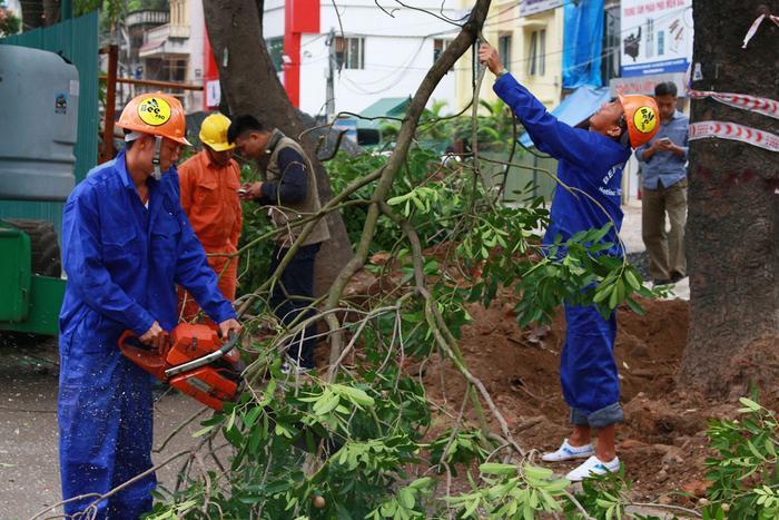 Với những cây có thể trồng được, nhà chức trách sẽ đưa về nút giao Tả Hồng - Võ Nguyên Giáp và nút giao quốc lộ 5 - vành đai 3.