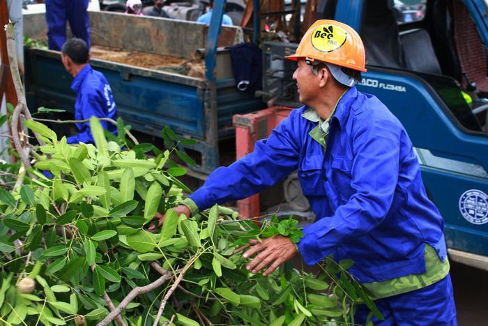 Chủ tịch Hà Nội cho rằng, cây xà cừ đã đánh chuyển không thể trồng lại trên phố. Số tiền để đánh chuyển, ươm trồng 1.000 cây trên đường Phạm Văn Đồng có thể dùng để trồng mới hàng chục nghìn cây khác.
