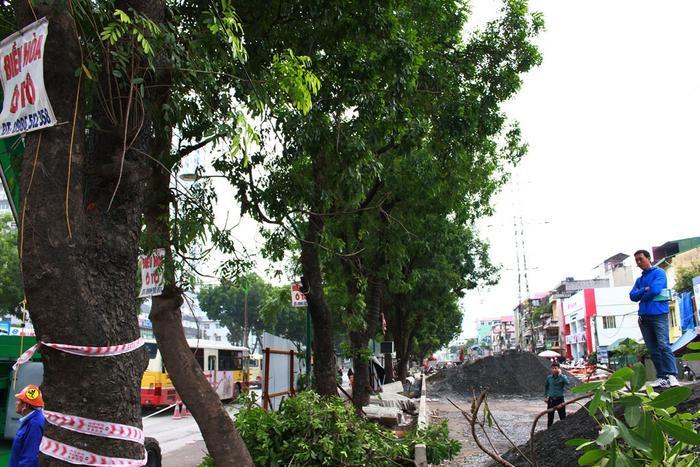 Sau một thời gian bàn bạc đã đi đến thống nhất chung là chặt hạ, di dời số cây xanh trên để tiến hành thi công.