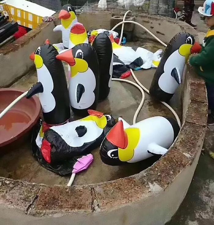 """Du khách mới đây đổ xô tới một sở thú ở thị trấn Ngọc Lâm, Quảng Tây, Trung Quốc để xem những chú chim cánh cụt được mang về từ Nam Cực. Tuy nhiên, khi tới nơi ai ai cũng đều tức giận vì sở thú này đã """"treo đầu dê bán thịt chó"""". Không thấy chim cánh cụt từ Nam Cực đâu, tới nơi họ chỉ thấy những chú chim cách cụt bơm hơi để thay thế."""