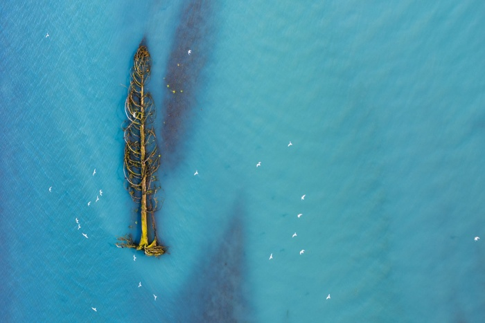 Những con mòng biển di cư bay từ cây tuyết tùng đang được trôi trên sông băng ở British Columbia, Canada.Hình ảnh này đang được đề cử trong hạng mục Trên không.