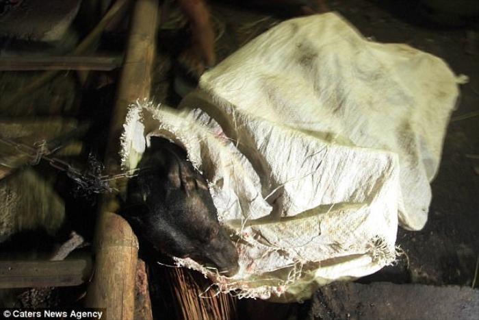 Những hình ảnh rùng rợn trong trang trại thịt chó khiến người yêu động vật thực sự phẫn nộ