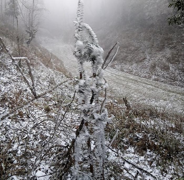 Tuyết rơi đóng băng dày trên cây cối.