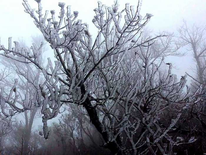 Cư dân mạng thích thú chia sẻ ảnh băng tuyết đóng trên cây cối rơi ở Y Tý.