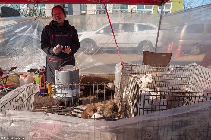 Tình cảnh khốn khổ của những chú chó được bày bán công khai tại Hàn Quốc khiến nhiều người không khỏi rùng mình