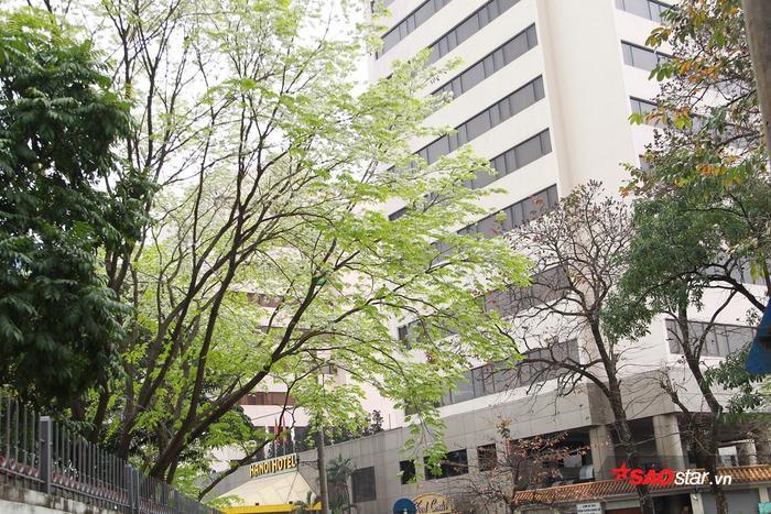 Những cây sưa lá xanh non mơn mởn, chỉ còn nhìn thấy màu trắng của hoa nở.