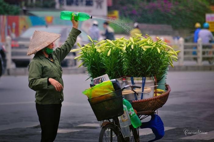 Những chiếc xe đạp chở đầy những hoa loa kèn bỗng khiến ta xao xuyến và yêu cái thành phố ồn ào này đến lạ. Người ta bảo Hà Nội khác những thành phố khác bởi những chiếc xe chở đầy những mùa hoa như thế.
