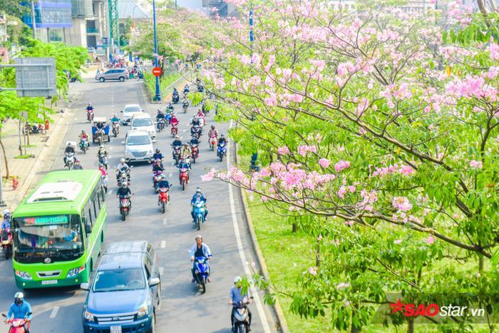 Ai đó đi qua đường cũng đều ngơ ngẩn ngẩn ngơ ngắm nhìn thứ hoa diệu kỳ ấy!