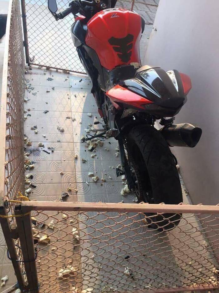"""Chiếc xe được bảo vệ bởi hàng rào sắt nhưng vẫn không ngăn được đàn chó """"hung hăng"""". Ảnh: T.T."""