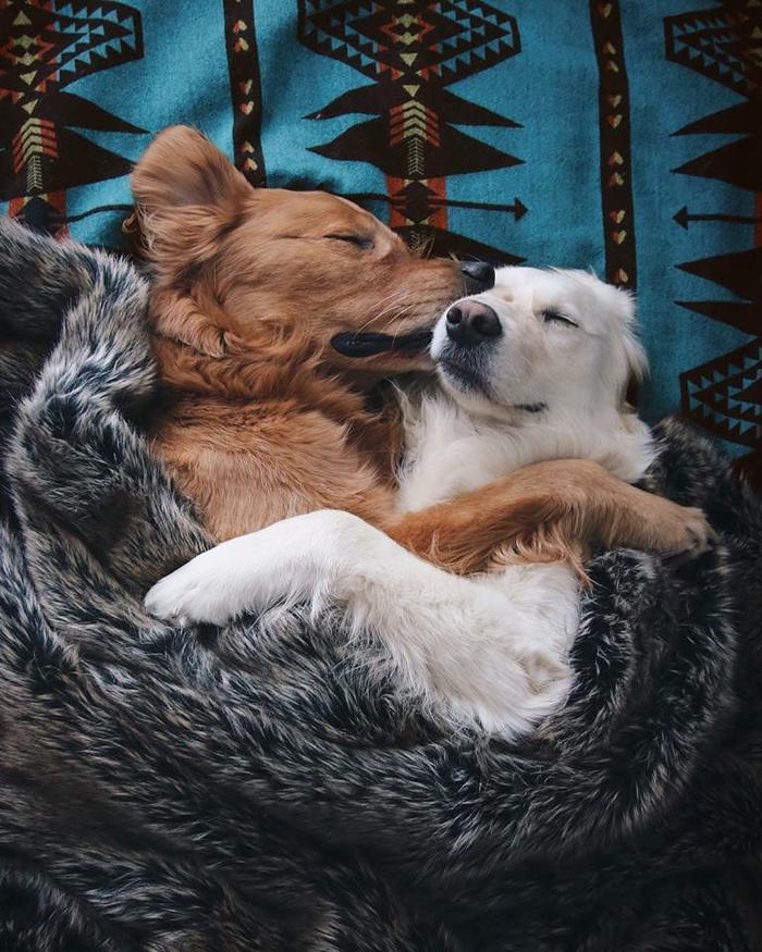 Hôm nay đi chơi mệt quá, ôm nhau ngủ một phát nào…