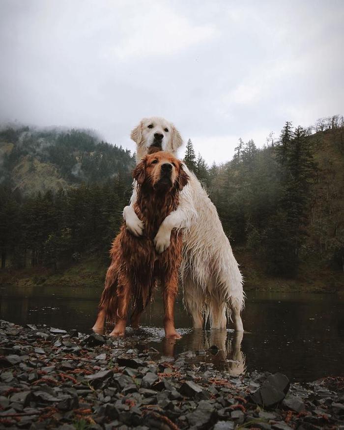 Có tắm hồ thì cũng tắm cùng nhau, xong rồi ôm nhau run rẩy thế này