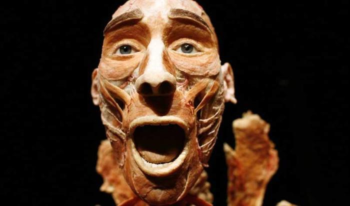 Bên trong bảo tàng cơ thể người đầu tiên trên thế giới ảnh 5