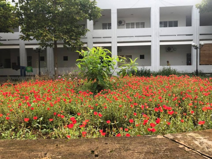 Đây là những bông hoa trong khuôn viên một bệnh viện ở Bù Đăng (Bình Phước). Trông vô cùng rực rỡ (Ảnh: Lê Ngọc Diệp)