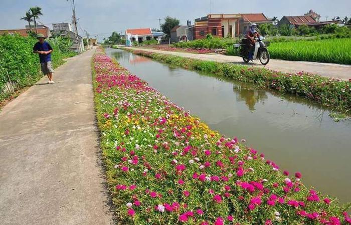 Con đây là con đường hoa ở Nam Định (Ảnh: Văn Đồi)