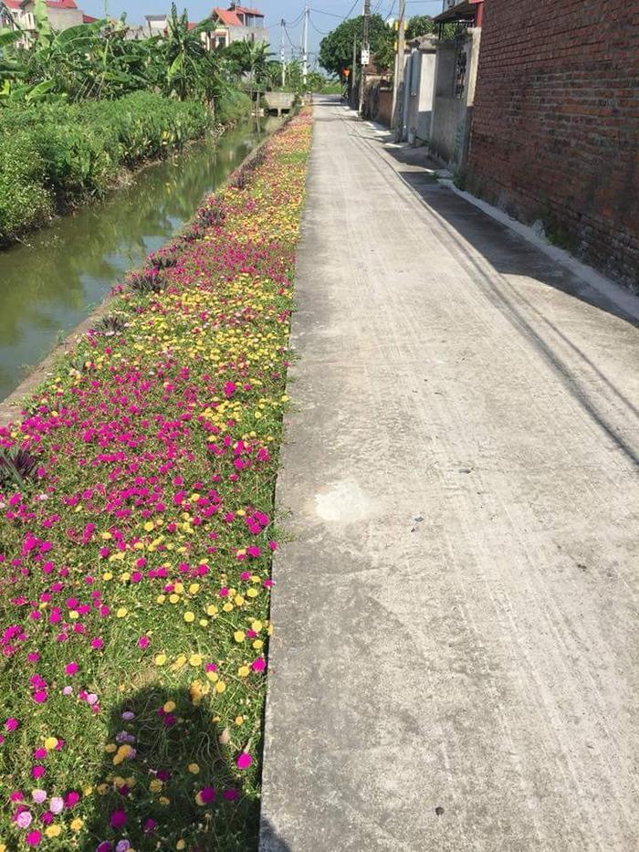 Con đường bê tông đúng là đã bớt khô cứng hơn nhờ vào những bông hoa này (Ảnh: Thái Phan)