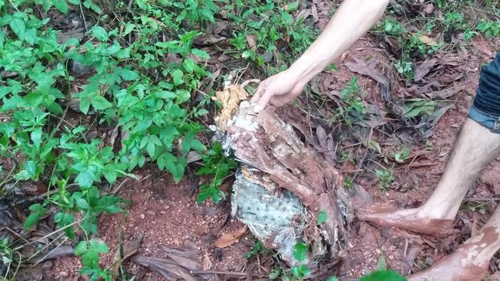 Nhiều mảnh vỡ được phát hiện