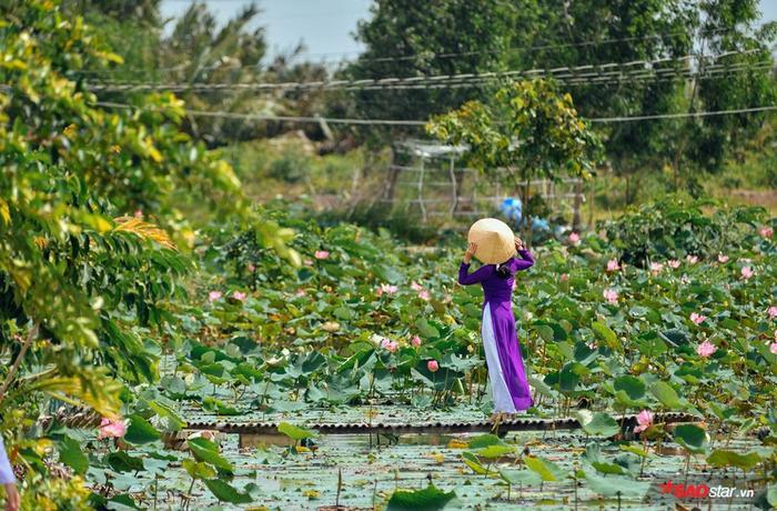Hay chọn chiếc áo dài tím, nón lá đầy truyền thống bên cạnh đồng sen thơ mộng này.