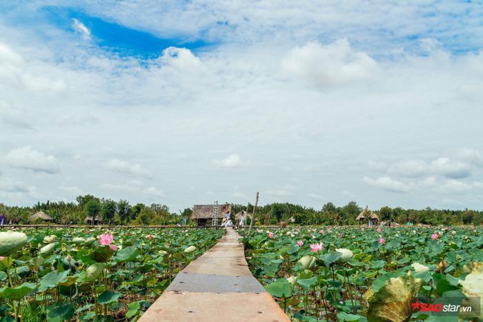 Đó là đồng sen Tam Đa (quận 9), cách trung tâm Sài Gòn khoảng 20km. Được biết, cánh đồng sen Tam Đa này đang trong thời kỳ nở rộ nhất năm.