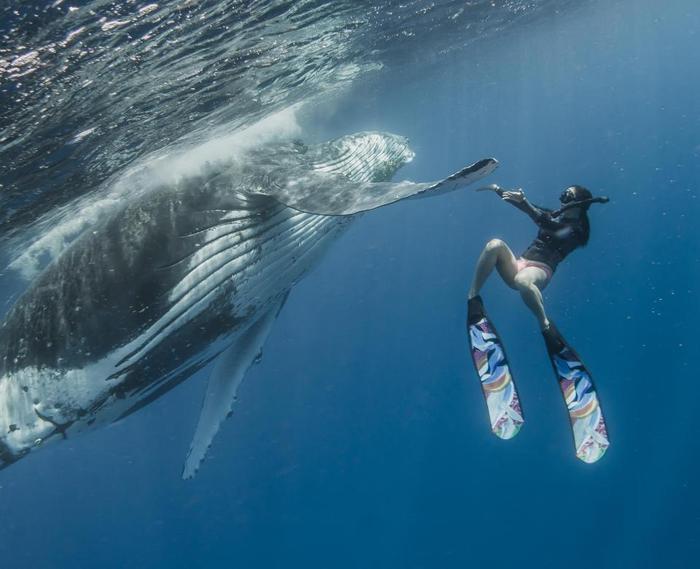 Khoảnh khắc rất thân mật giữa cá voi lưng gù với nam thanh niên. Ảnh: The Sun