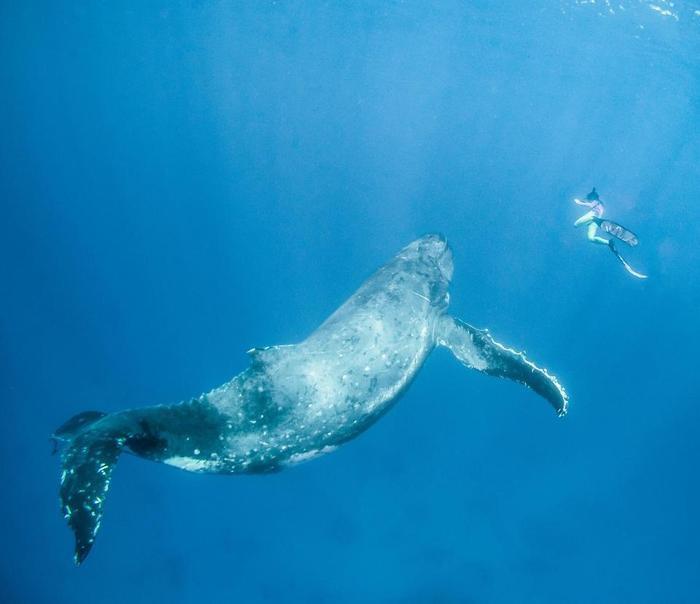 Cuộc gặp gỡ giữa cá voi và nam thanh niên này kéo dài khoảng 2 đến 3 giờ đồng hồ. Ảnh: The Sun